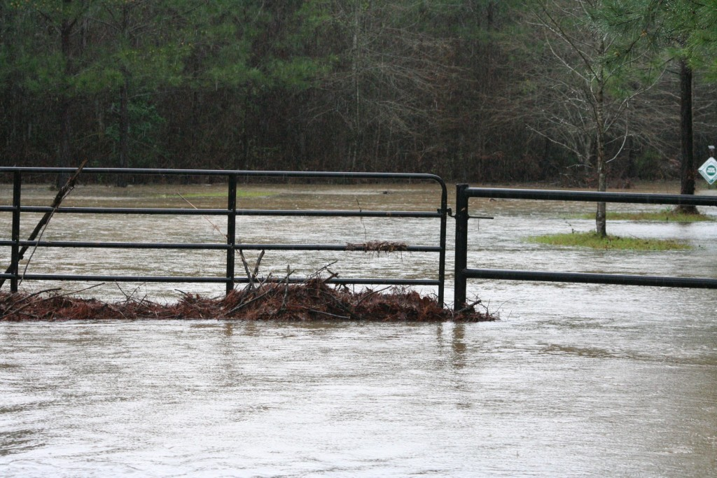 This is the gate to Wood Water Tree Farm. I have never heard of it, or I just never paid attention to it. See the debris in the gate? At some point the water was going over highway 111. I actually don't know if this is a real business or not, but it took a beating.