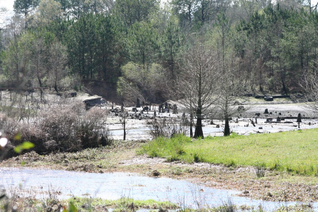 This is a pond across the road from my sister's house. I believe this was my Uncle Willy's pond, but I am not sure. The levy broke pretty big and every drop of water rushed out. Just more devastation from the rain itself, not just from the Sabine River Authority.